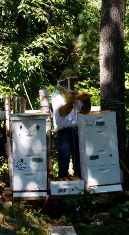 Nick McGough keeps bees in Burlington. Photo courtesy of Nick McGough