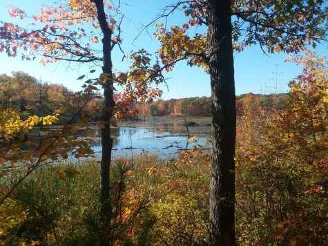 An overlook in Sessions Woods that showcases the beauty of the pond in autumn.