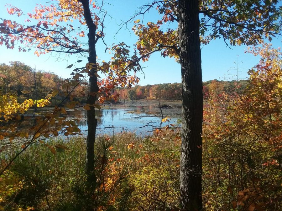 An+overlook+in+Sessions+Woods+that+showcases+the+beauty+of+the+pond+in+autumn.