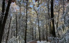 Snow collects in Sessions Woods, Burlington in late-October, a rare-sight so early in the year.